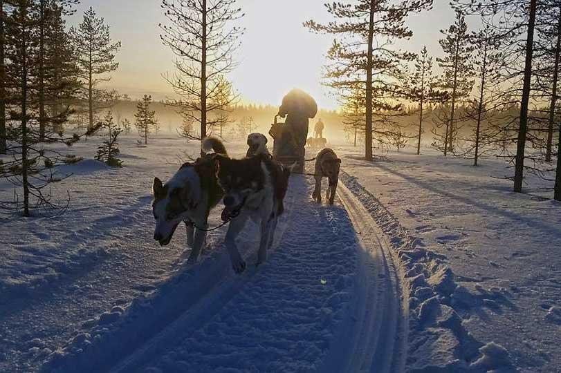 Finn Jann – Huskyfarmi ja majoitusta